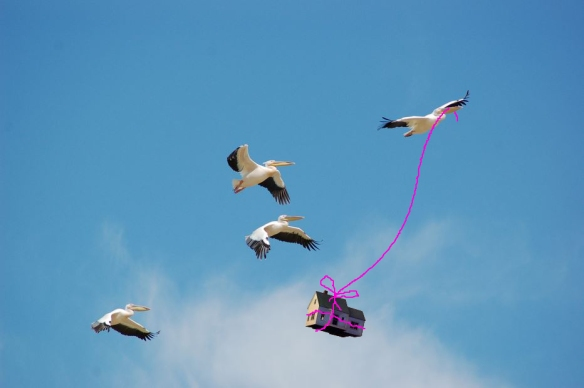birds taking house